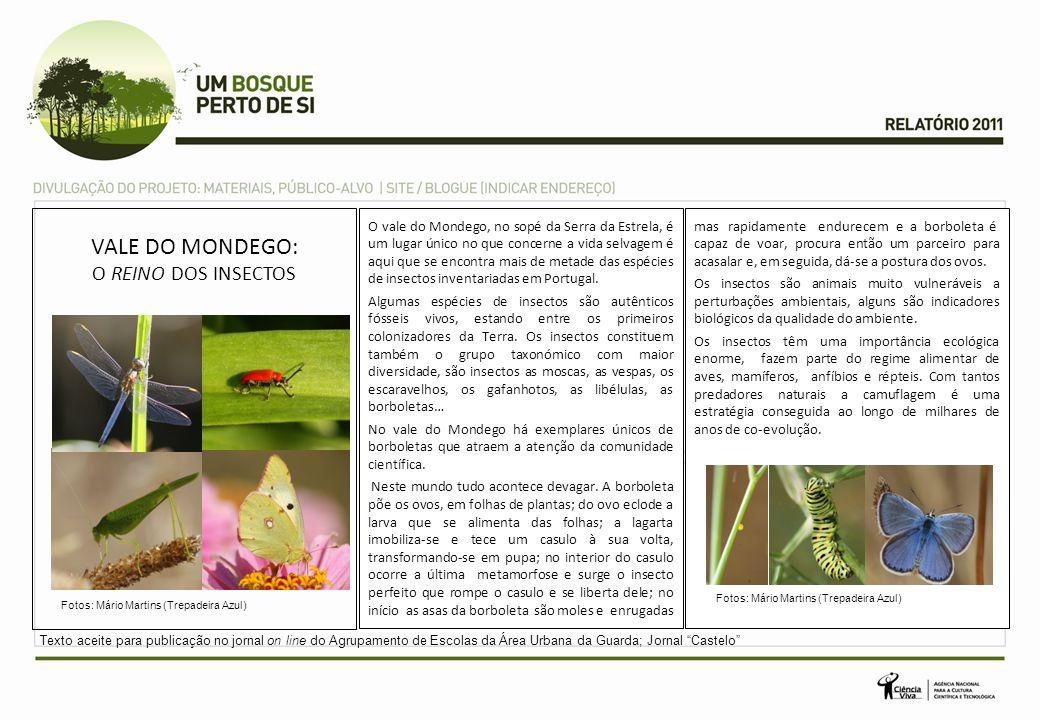 VALE DO MONDEGO: O REINO DOS INSECTOS