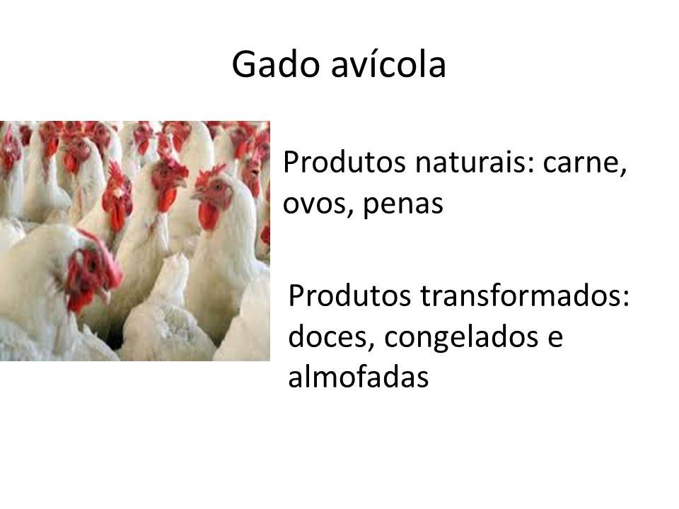 Gado avícola Produtos naturais: carne, ovos, penas