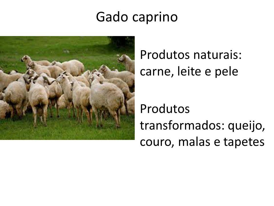 Gado caprino Produtos naturais: carne, leite e pele
