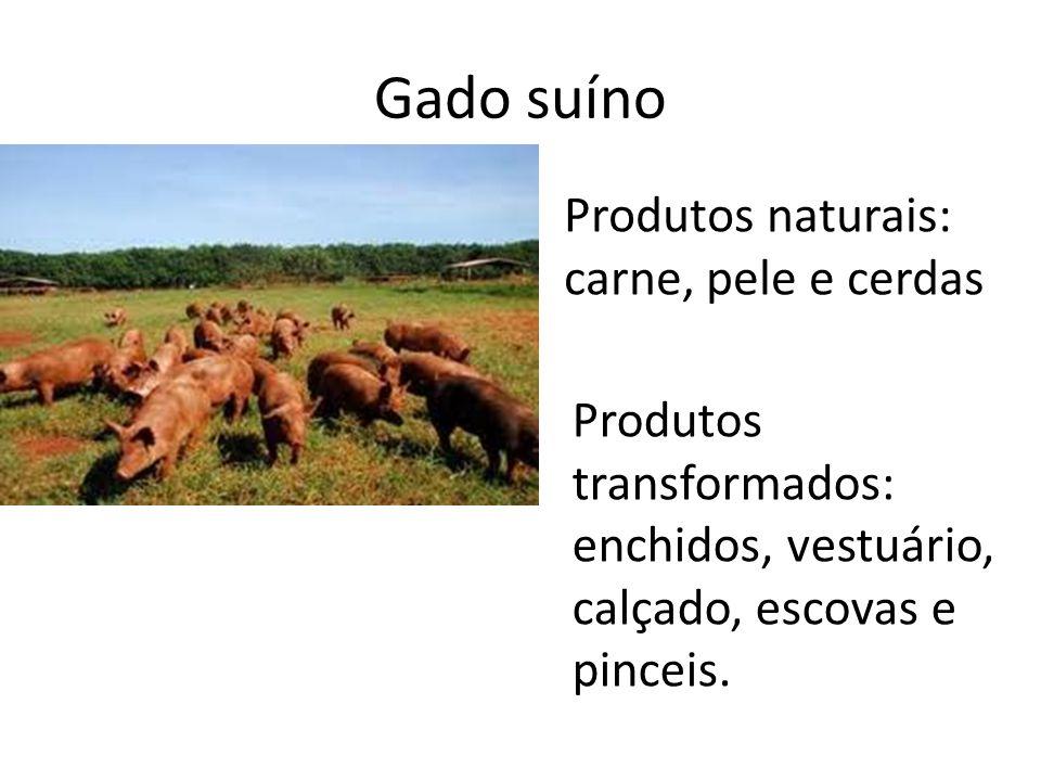 Gado suíno Produtos naturais: carne, pele e cerdas