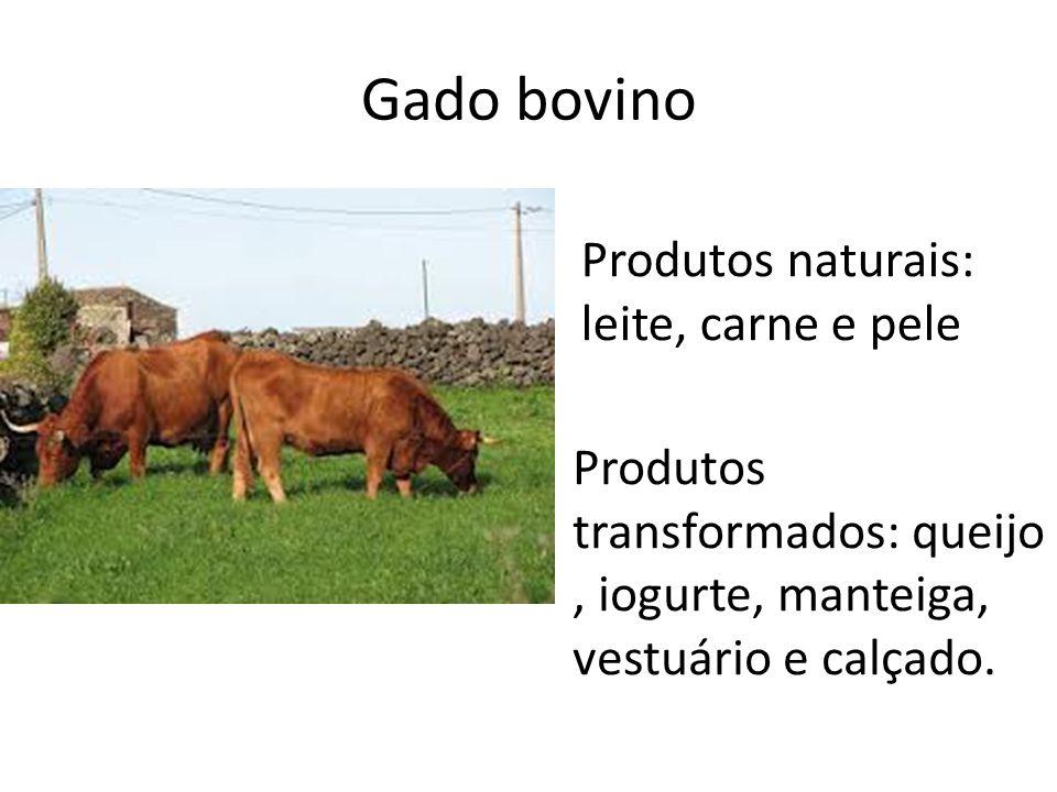 Gado bovino Produtos naturais: leite, carne e pele