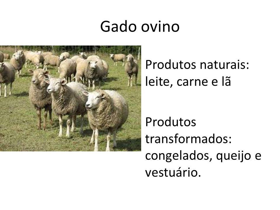 Gado ovino Produtos naturais: leite, carne e lã
