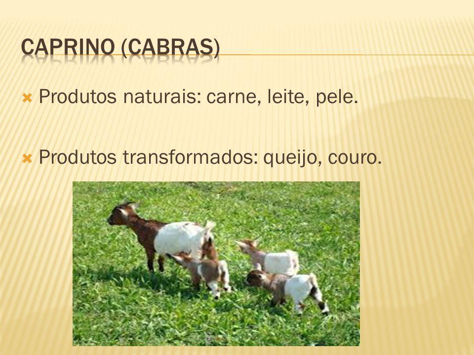 Caprino (cabras) Produtos naturais: carne, leite, pele.
