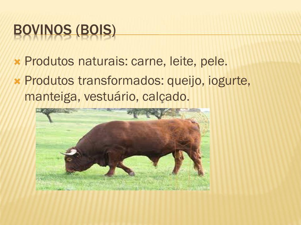 Bovinos (bois) Produtos naturais: carne, leite, pele.