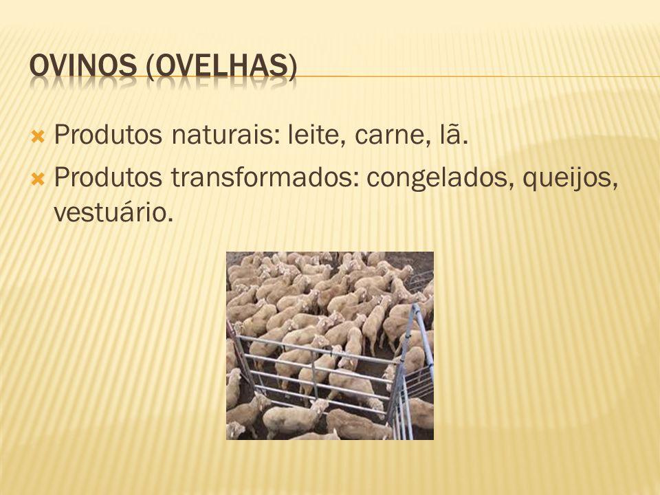 Ovinos (ovelhas) Produtos naturais: leite, carne, lã.
