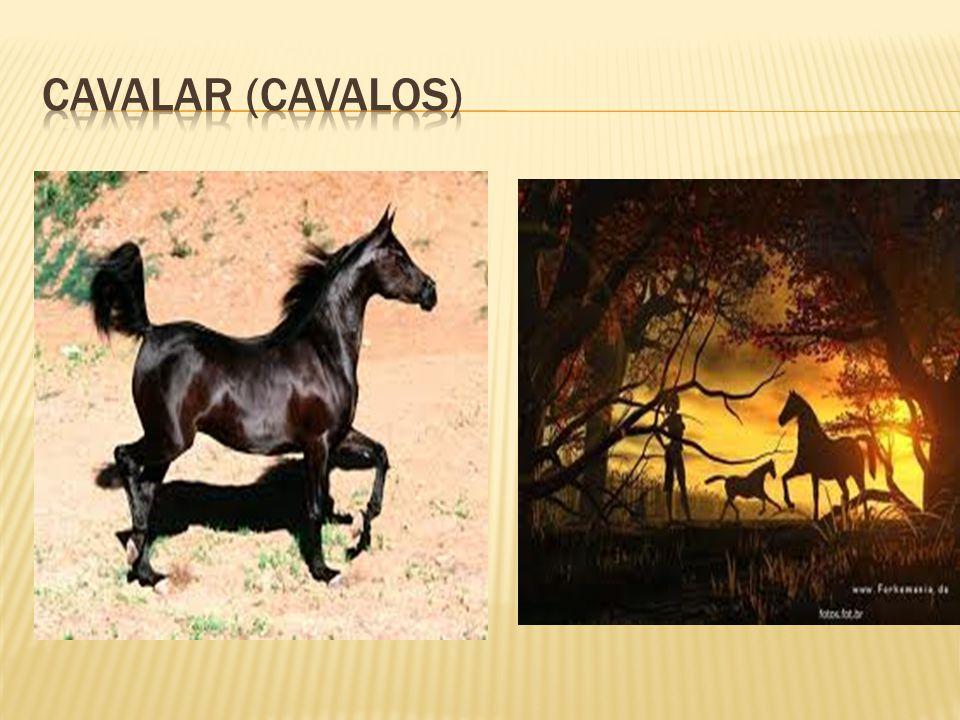 Cavalar (cavalos)