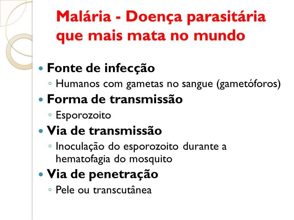 Malária - Doença parasitária que mais mata no mundo