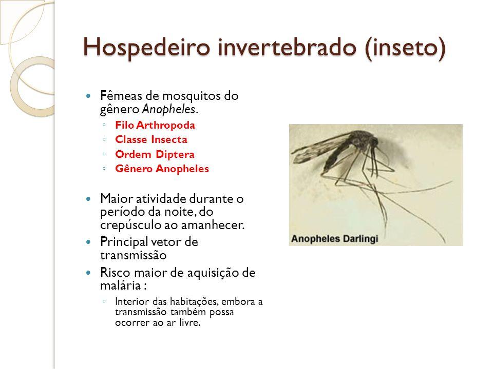 Hospedeiro invertebrado (inseto)