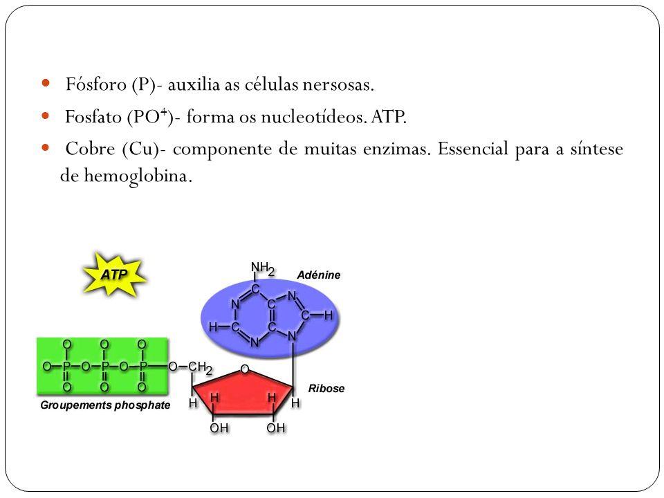 Fósforo (P)- auxilia as células nersosas.