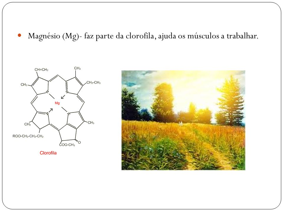 Magnésio (Mg)- faz parte da clorofila, ajuda os músculos a trabalhar.