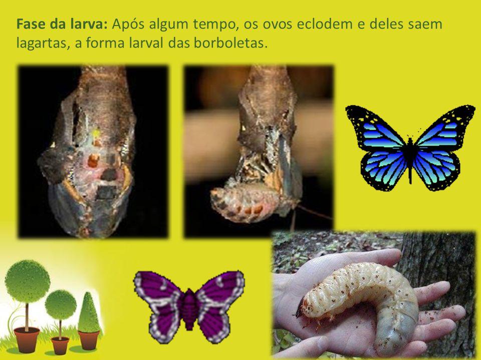 Fase da larva: Após algum tempo, os ovos eclodem e deles saem lagartas, a forma larval das borboletas.