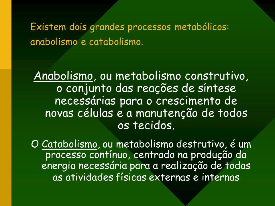 Existem dois grandes processos metabólicos: anabolismo e catabolismo.