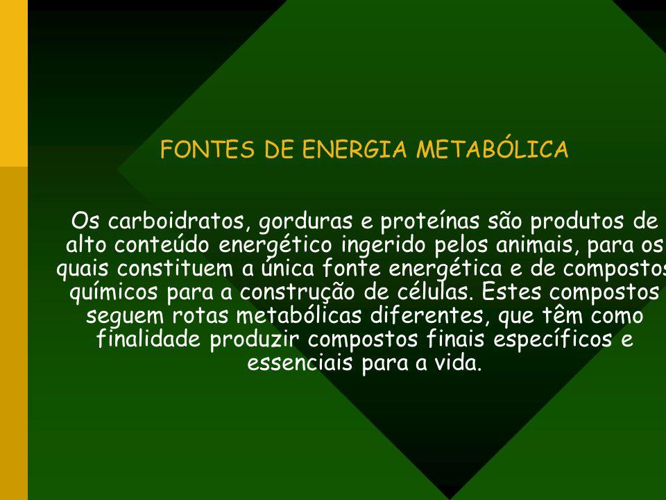 FONTES DE ENERGIA METABÓLICA Os carboidratos, gorduras e proteínas são produtos de alto conteúdo energético ingerido pelos animais, para os quais constituem a única fonte energética e de compostos químicos para a construção de células.