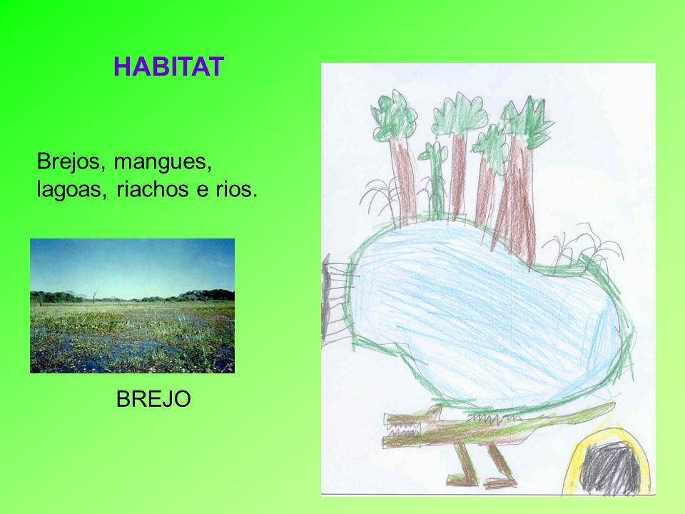 Brejos, mangues, lagoas, riachos e rios.