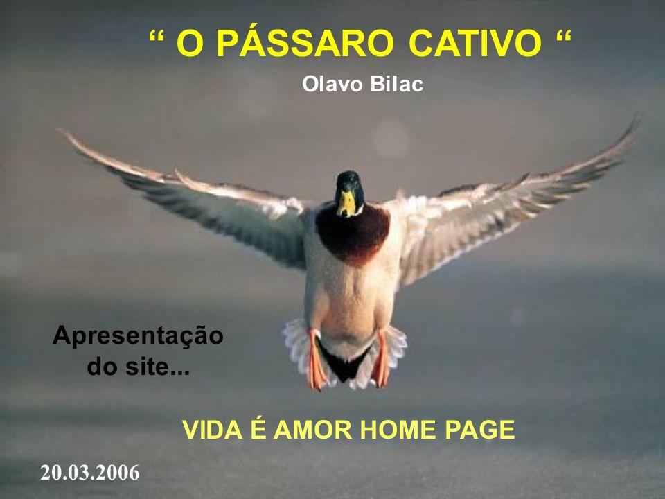 O PÁSSARO CATIVO Apresentação do site... VIDA É AMOR HOME PAGE