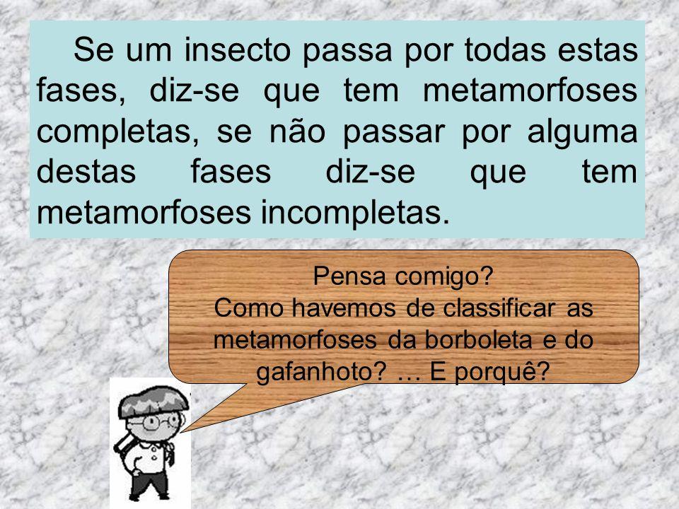 Se um insecto passa por todas estas fases, diz-se que tem metamorfoses completas, se não passar por alguma destas fases diz-se que tem metamorfoses incompletas.