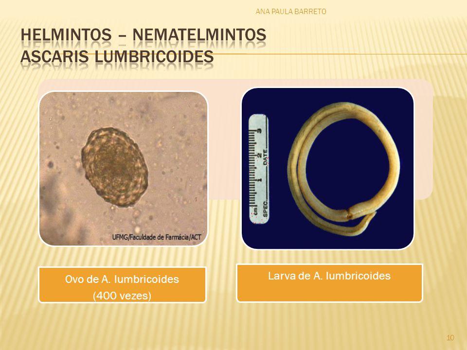 HELMINTOS – nematelmintos ascaris lumbricoides