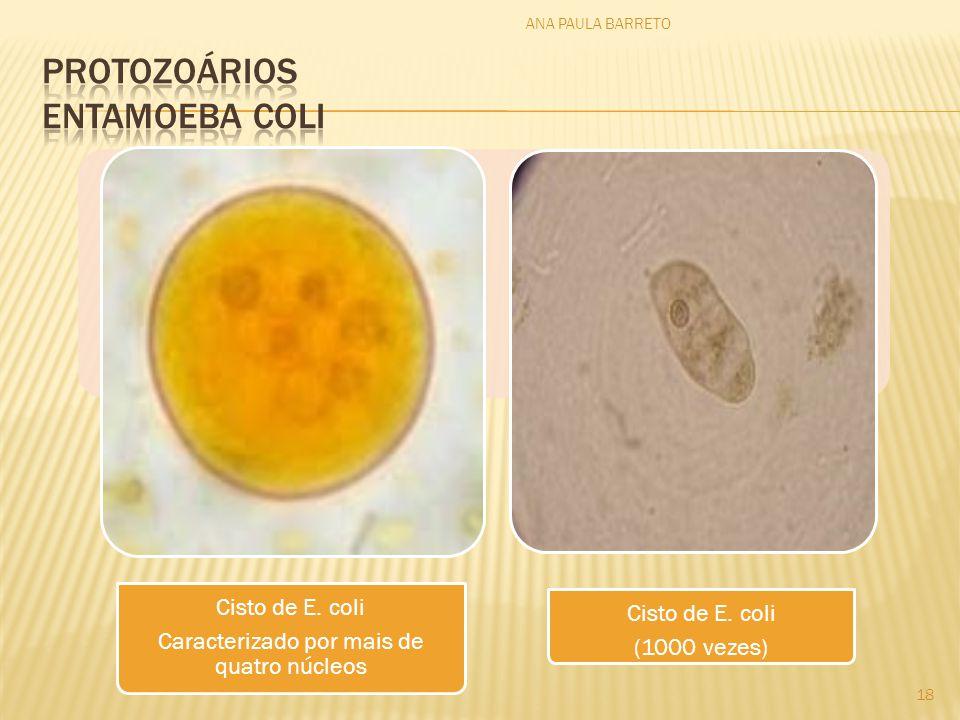 Protozoários Entamoeba coli