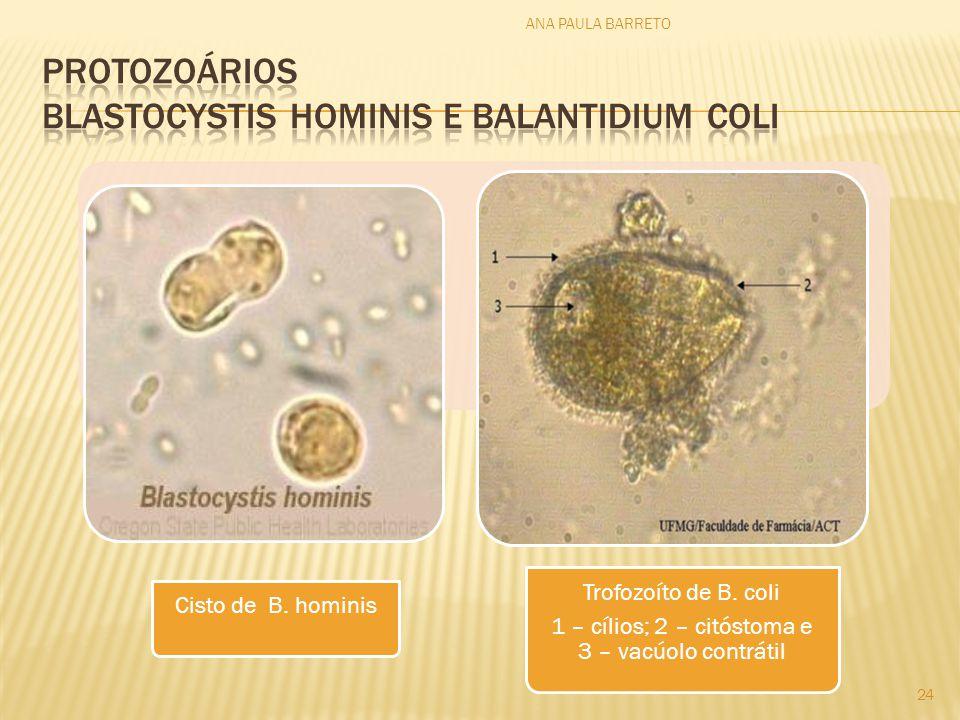 Protozoários blastocystis hominis e balantidium coli