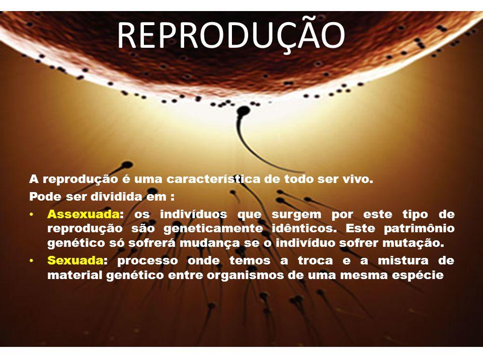 REPRODUÇÃO A reprodução é uma característica de todo ser vivo.