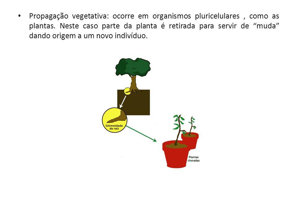 Propagação vegetativa: ocorre em organismos pluricelulares , como as plantas.