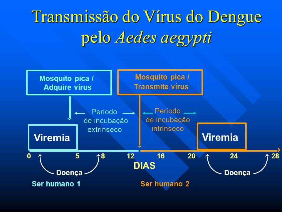 Transmissão do Vírus do Dengue pelo Aedes aegypti