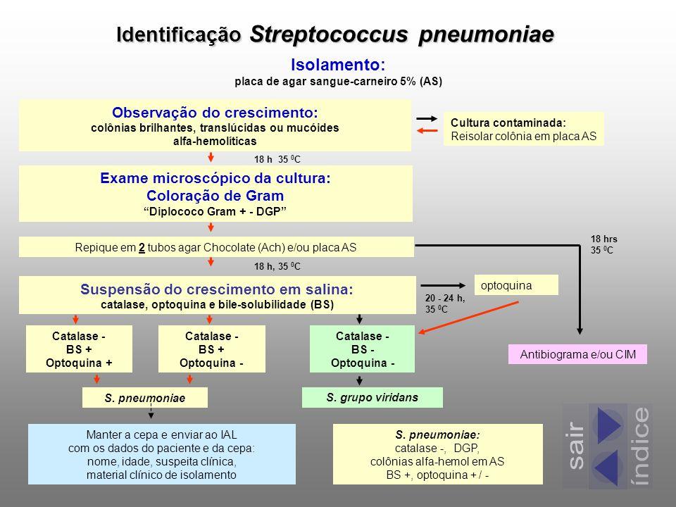 índice sair Identificação Streptococcus pneumoniae Isolamento: