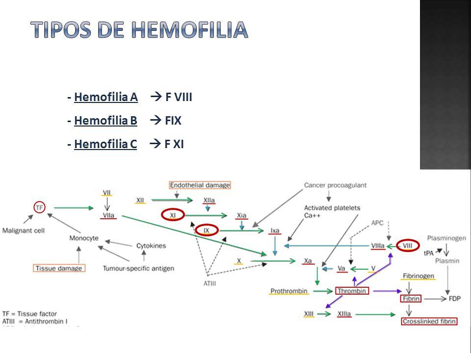 Tipos de hemofilia - Hemofilia A  F VIII - Hemofilia B  FIX