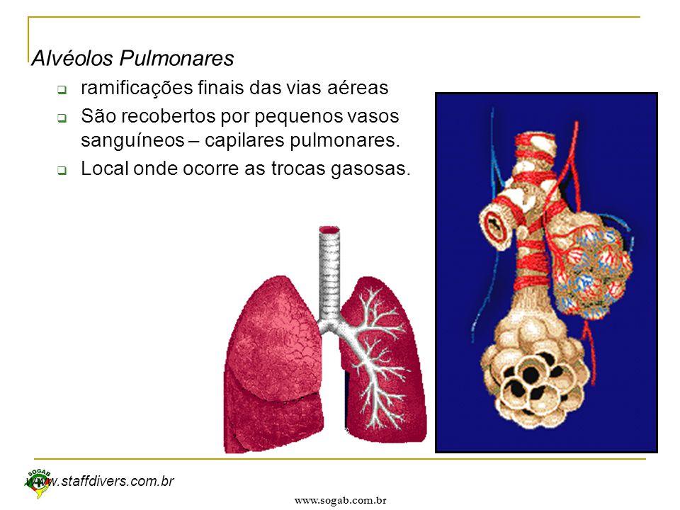 Alvéolos Pulmonares ramificações finais das vias aéreas