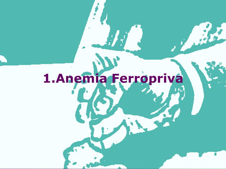1.Anemia Ferropriva