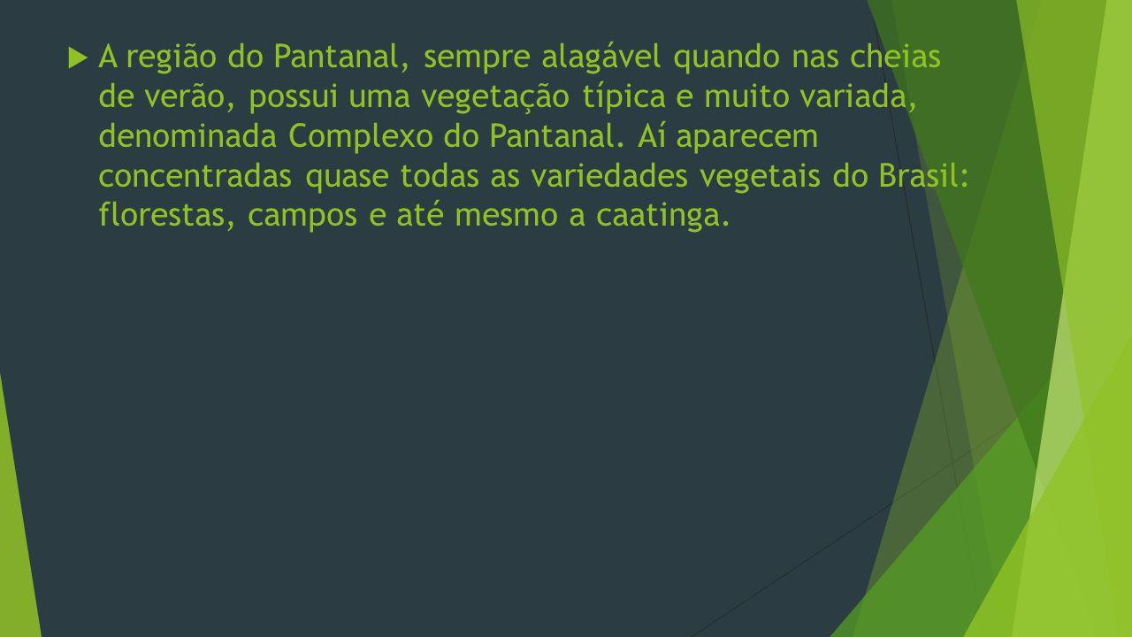 A região do Pantanal, sempre alagável quando nas cheias de verão, possui uma vegetação típica e muito variada, denominada Complexo do Pantanal.