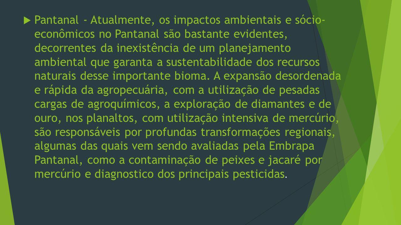 Pantanal - Atualmente, os impactos ambientais e sócio- econômicos no Pantanal são bastante evidentes, decorrentes da inexistência de um planejamento ambiental que garanta a sustentabilidade dos recursos naturais desse importante bioma.