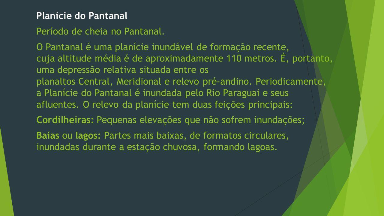 Período de cheia no Pantanal.