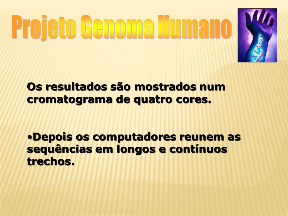 Projeto Genoma Humano Os resultados são mostrados num cromatograma de quatro cores.