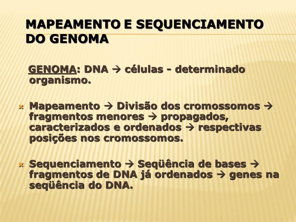 MAPEAMENTO E SEQUENCIAMENTO DO GENOMA