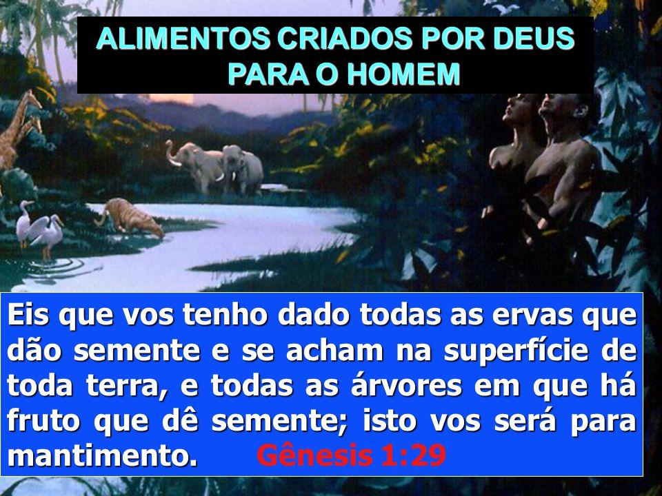 ALIMENTOS CRIADOS POR DEUS