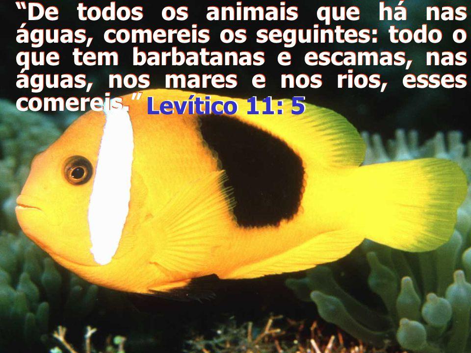 De todos os animais que há nas águas, comereis os seguintes: todo o que tem barbatanas e escamas, nas águas, nos mares e nos rios, esses comereis.
