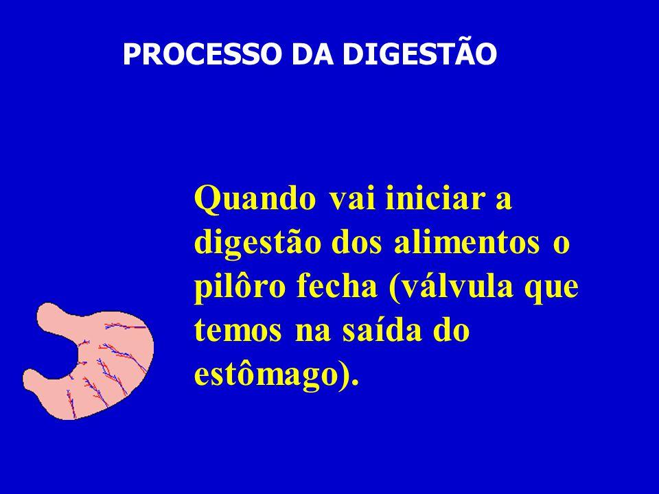 PROCESSO DA DIGESTÃO Quando vai iniciar a digestão dos alimentos o pilôro fecha (válvula que temos na saída do estômago).