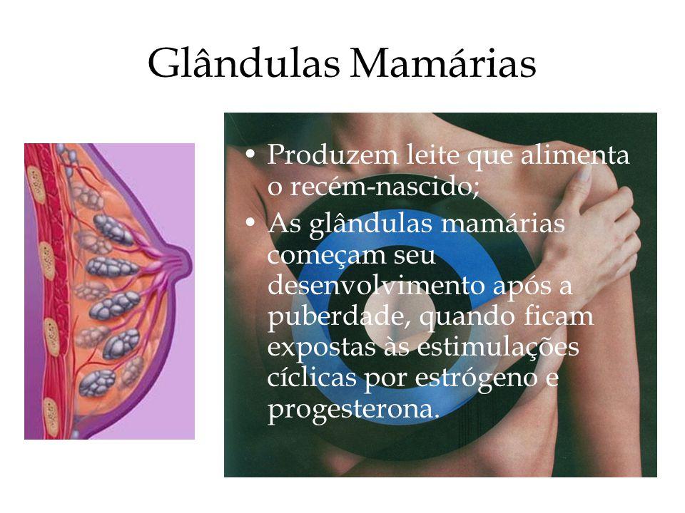 Glândulas Mamárias Produzem leite que alimenta o recém-nascido;