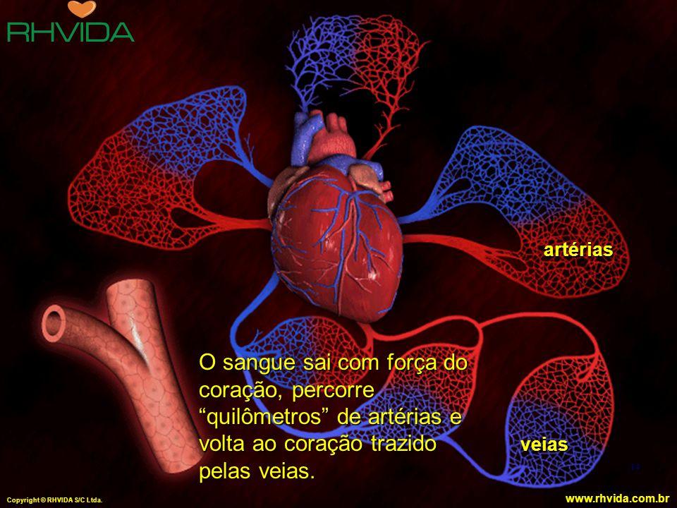 artérias O sangue sai com força do coração, percorre quilômetros de artérias e volta ao coração trazido pelas veias.