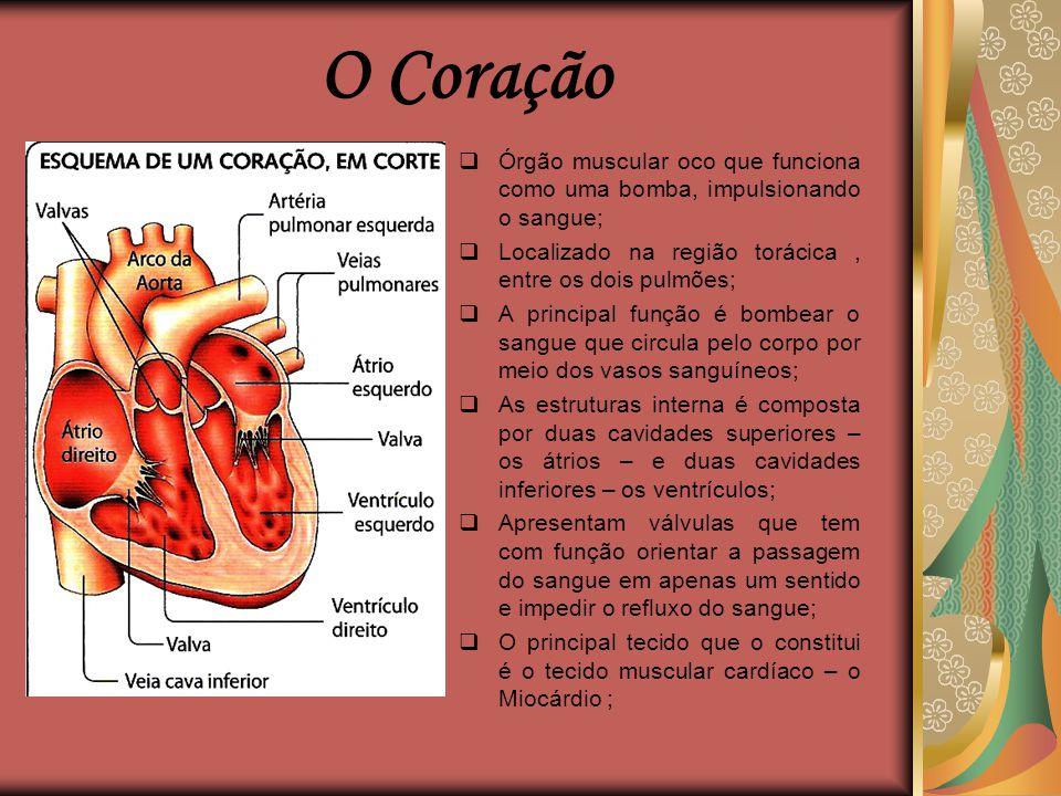 O Coração Órgão muscular oco que funciona como uma bomba, impulsionando o sangue; Localizado na região torácica , entre os dois pulmões;