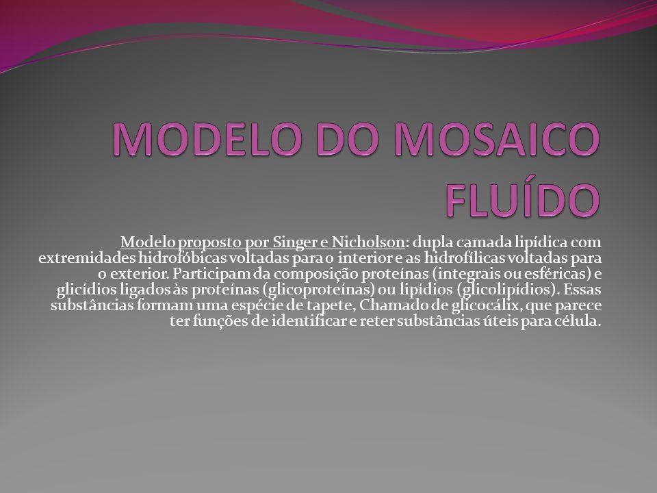 MODELO DO MOSAICO FLUÍDO