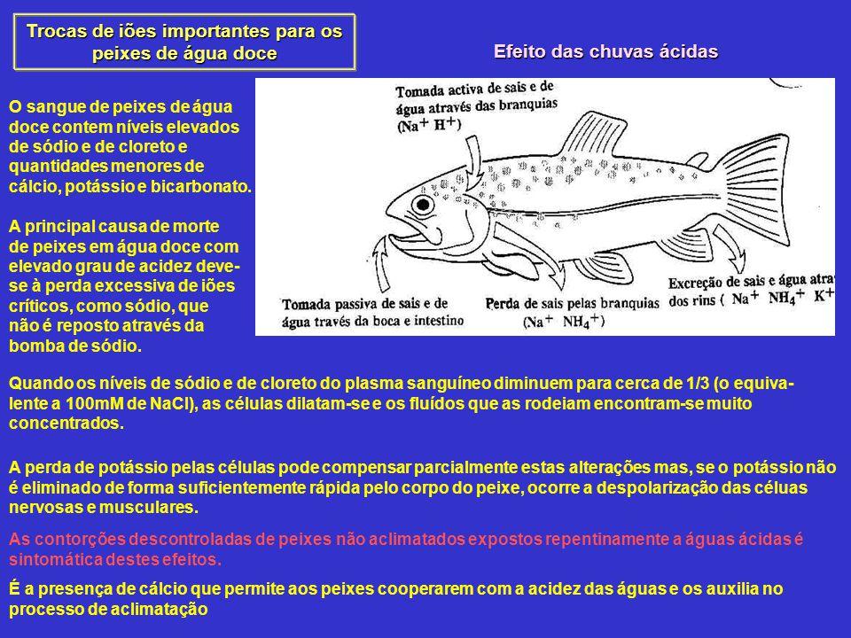 Trocas de iões importantes para os peixes de água doce