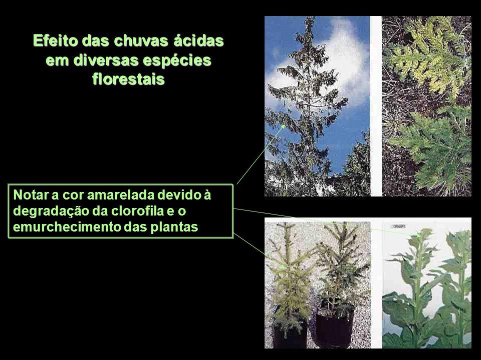 Efeito das chuvas ácidas em diversas espécies florestais