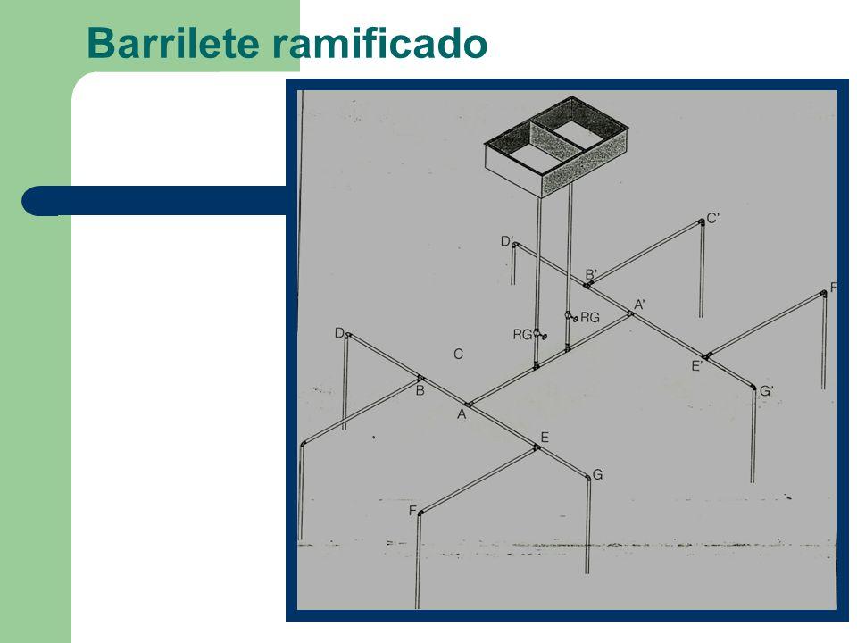 Barrilete ramificado
