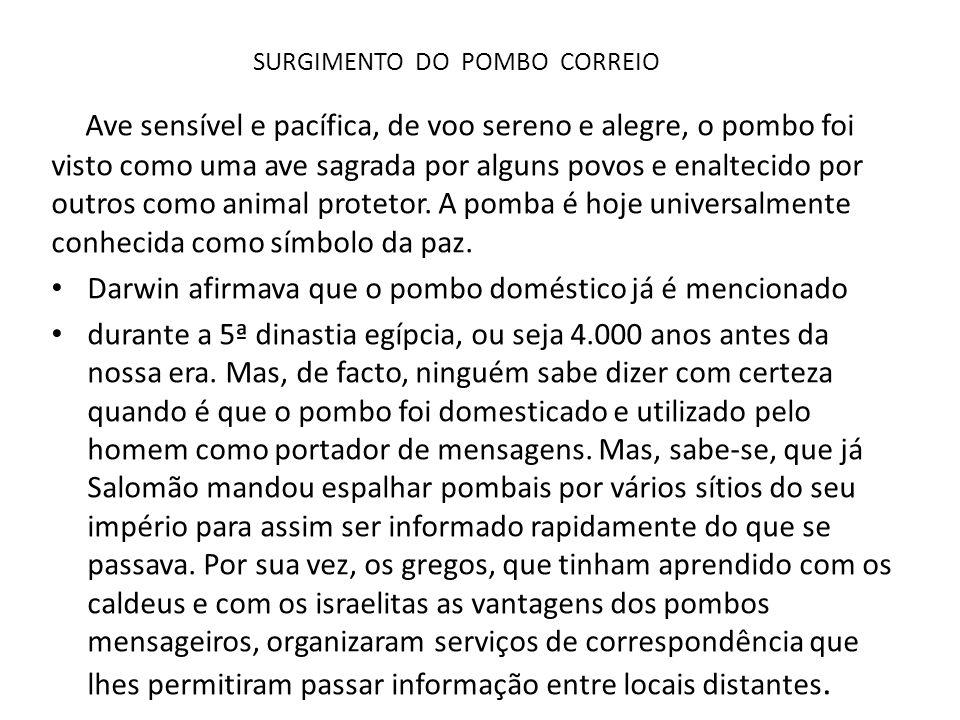 SURGIMENTO DO POMBO CORREIO