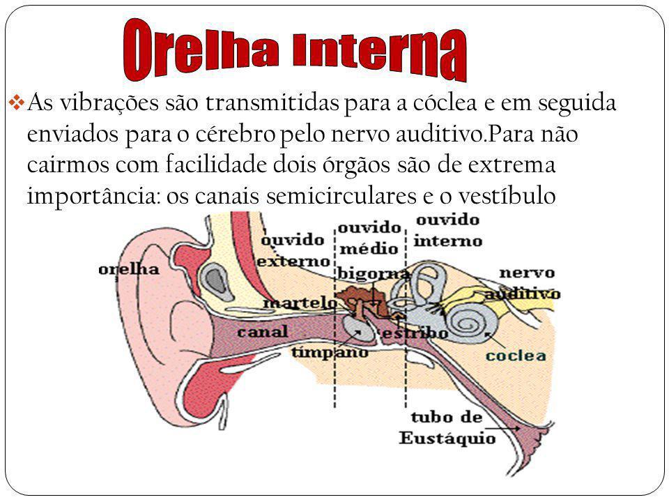 Orelha Interna