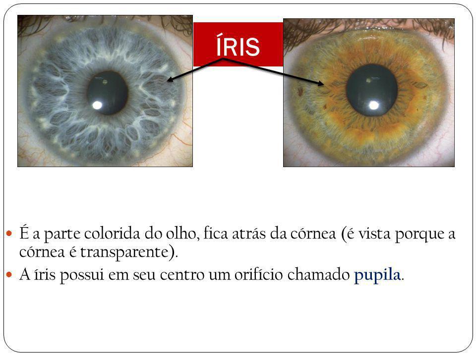 ÍRIS É a parte colorida do olho, fica atrás da córnea (é vista porque a córnea é transparente).