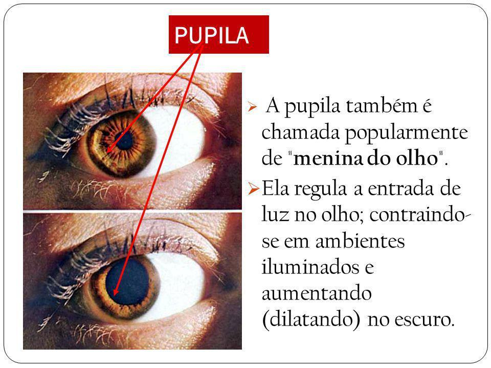 PUPILA A pupila também é chamada popularmente de menina do olho .