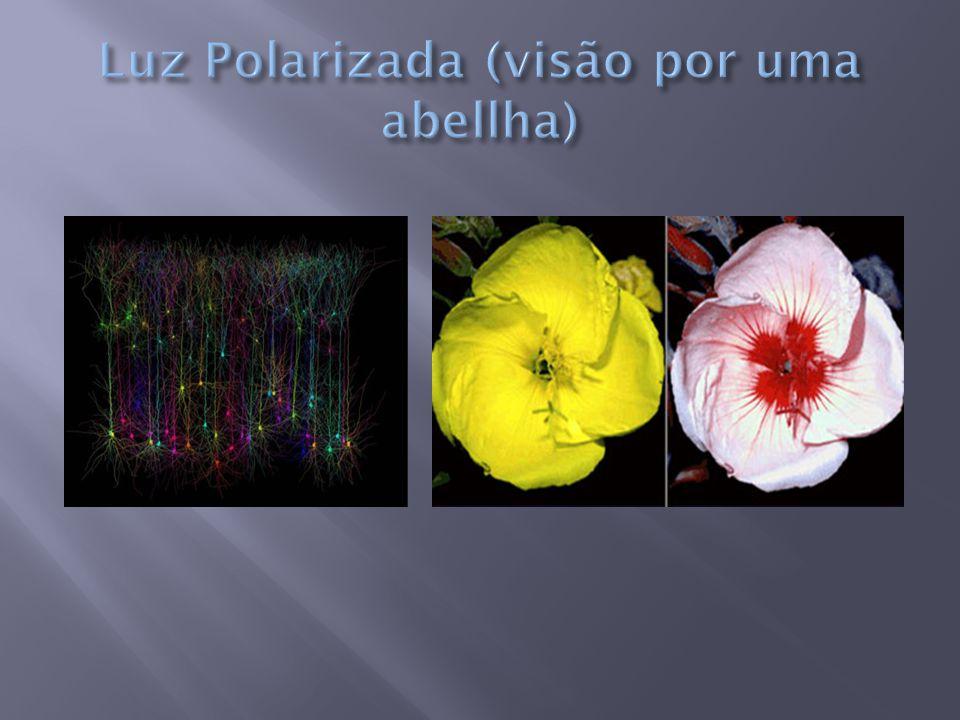 Luz Polarizada (visão por uma abellha)